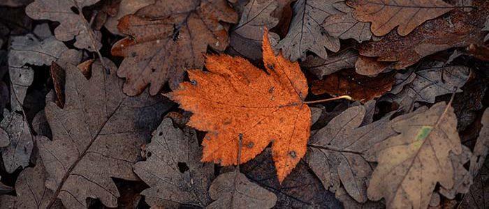 Passer du chaud au froid en automne avec la climatisation réversible…